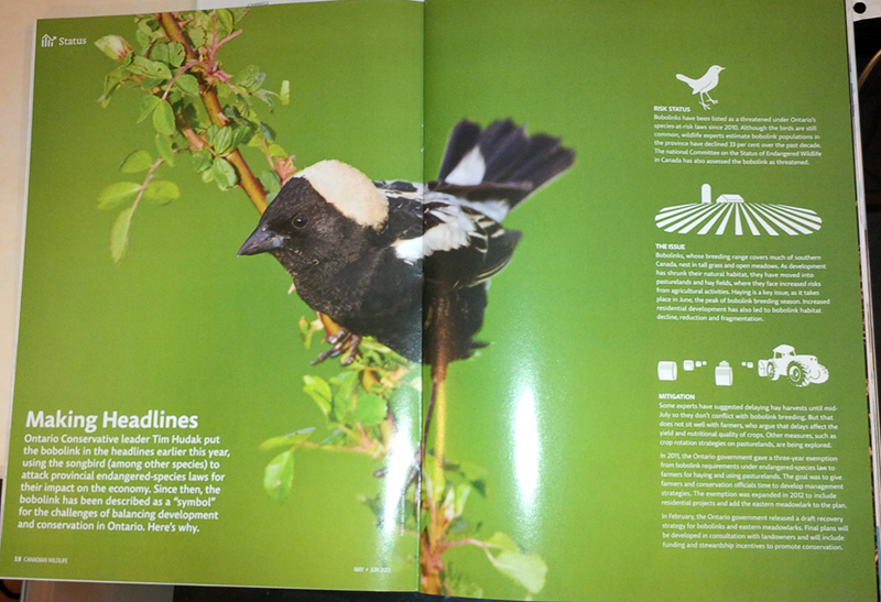 Canadian Wildlife Magazine June 2013